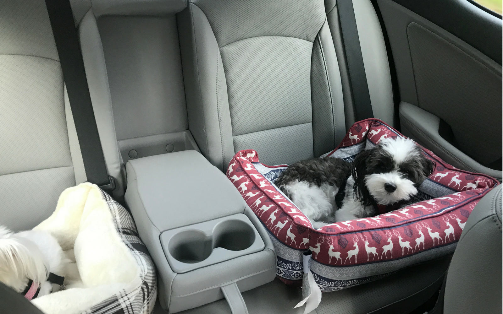 Road Trips With Small Dogs