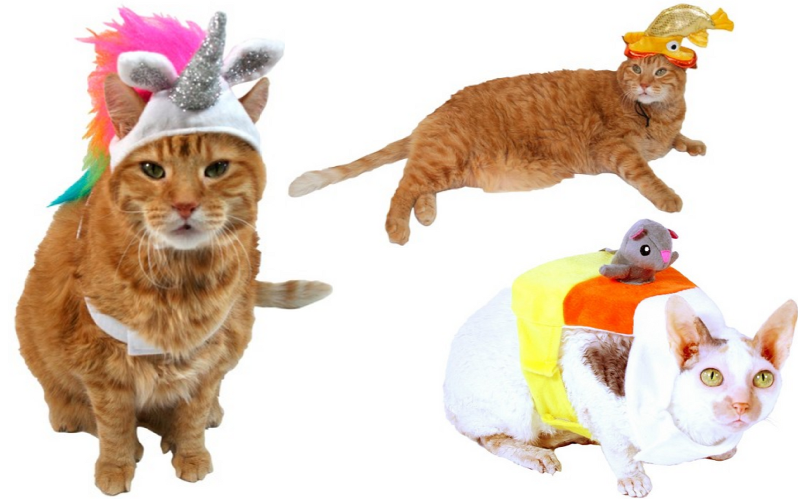 Target Has Seriously Adorable Halloween Costumes for Pets for as low as $4.99