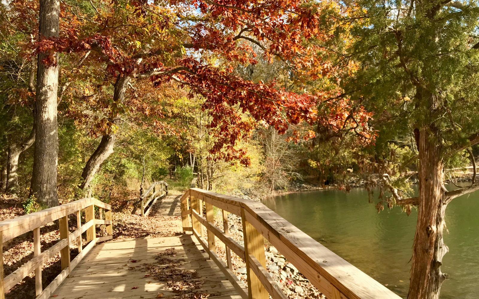 Head to McDowell Nature Preserve ASAP to Bask In Fall Leaf Perfection