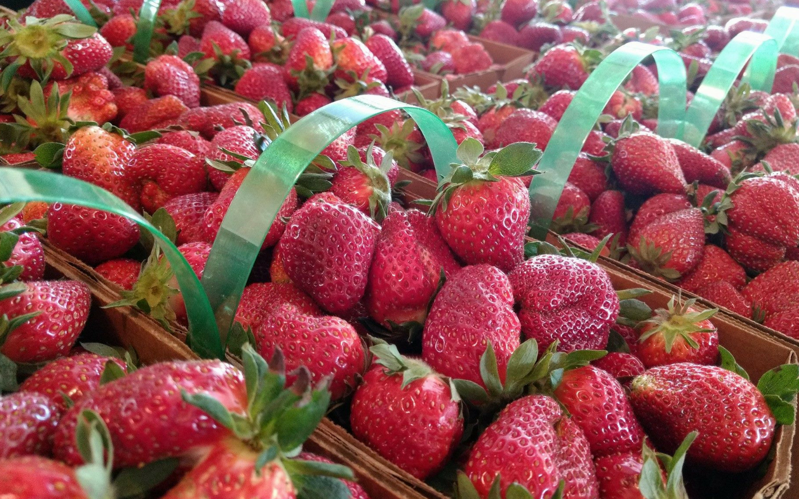 The Best Strawberry Farm in Gaston County
