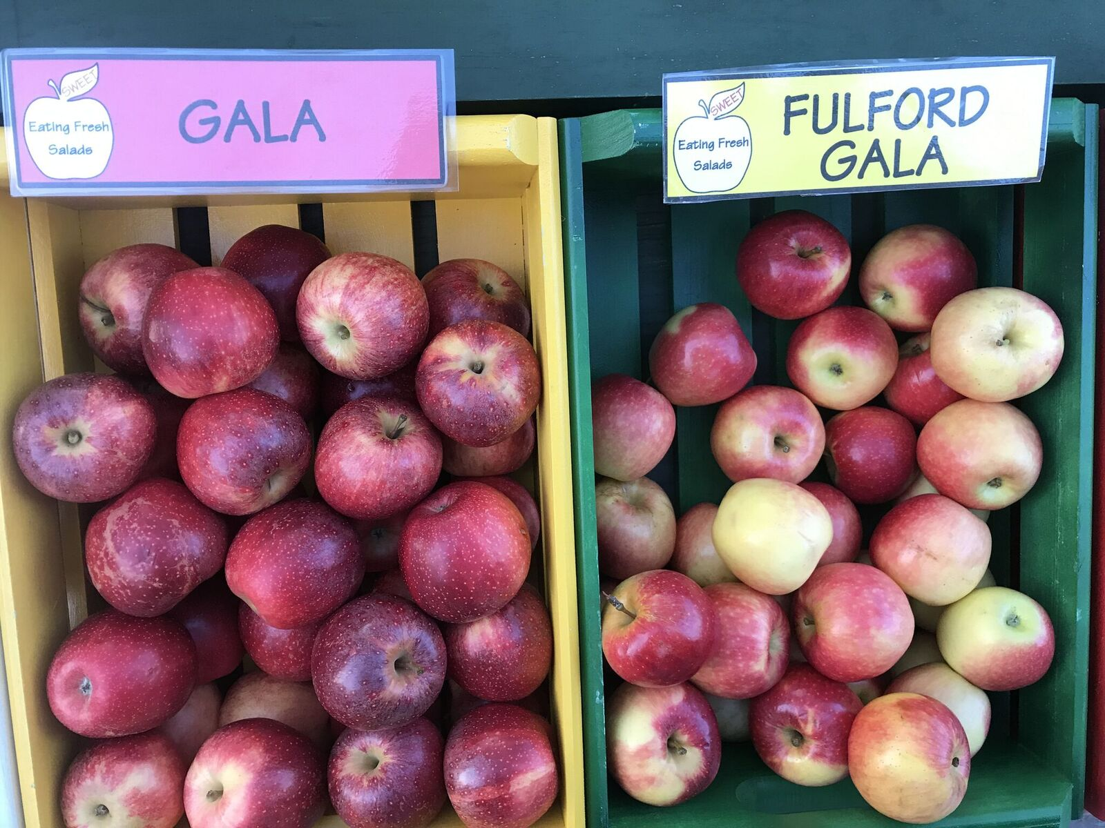 apple festival