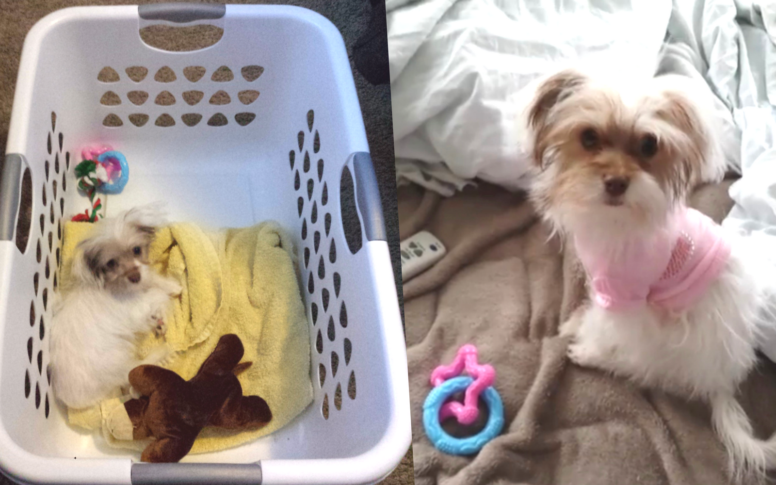Dog Toy Sale Alert! Nylabone Teething Toys 40% Off at Amazon + Review