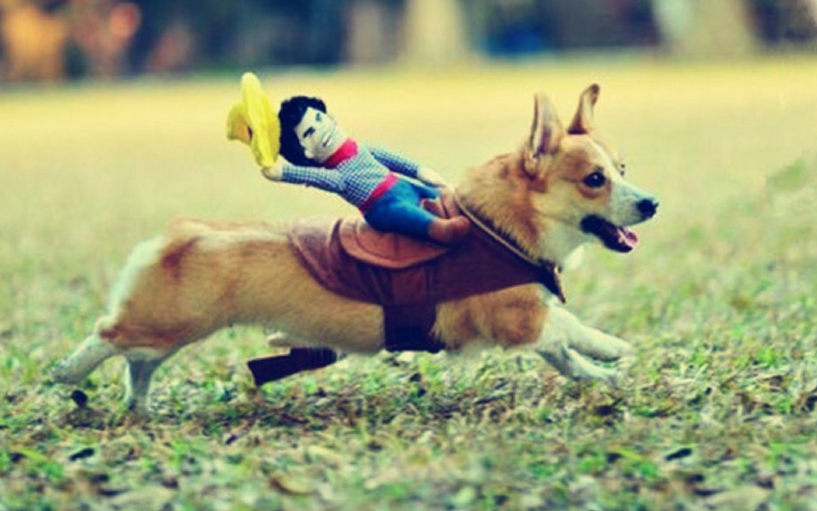 The Cutest Halloween Costumes for Small Dogs