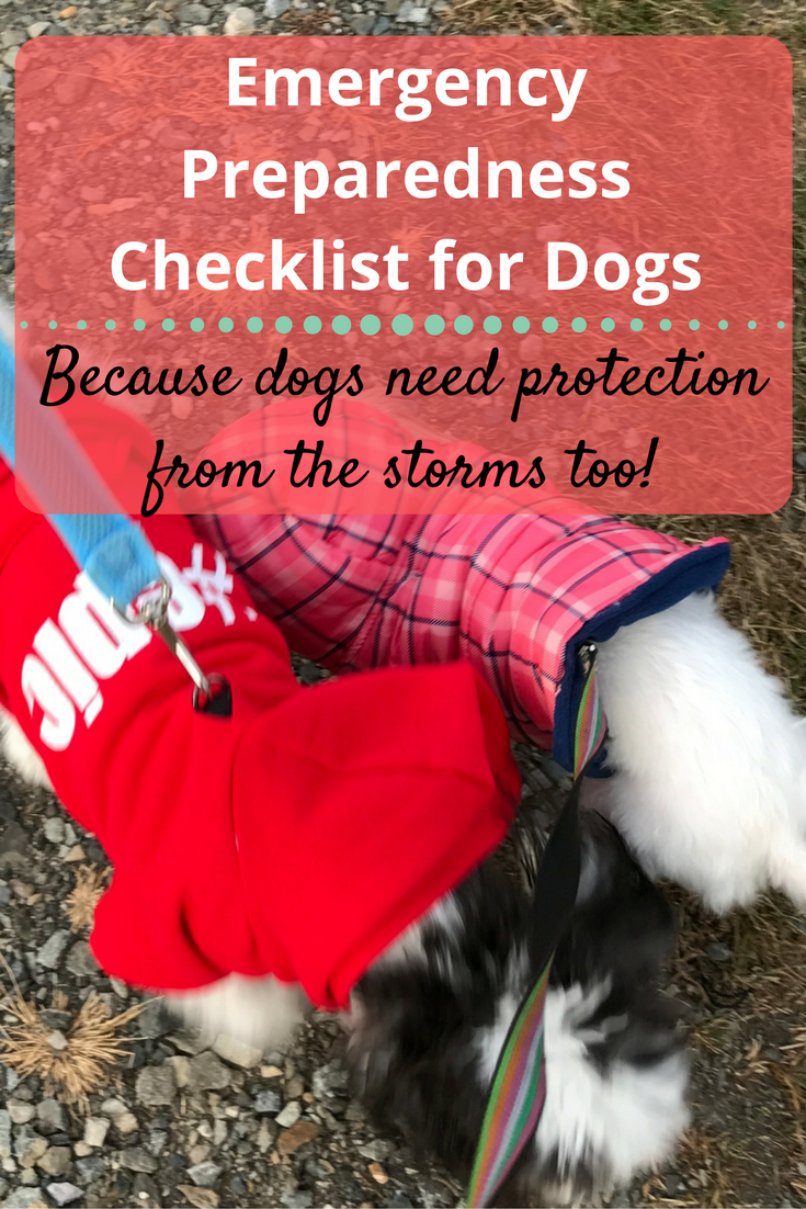 Emergency Preparedness Checklist For Dogs