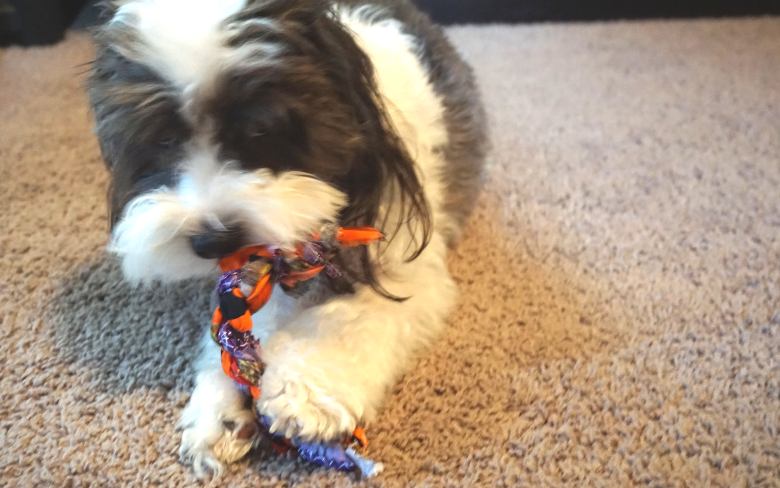 Dog Grooming Bandana Repurpose MiniSeries: DIY No-Sew Dog Rope for Small Dogs