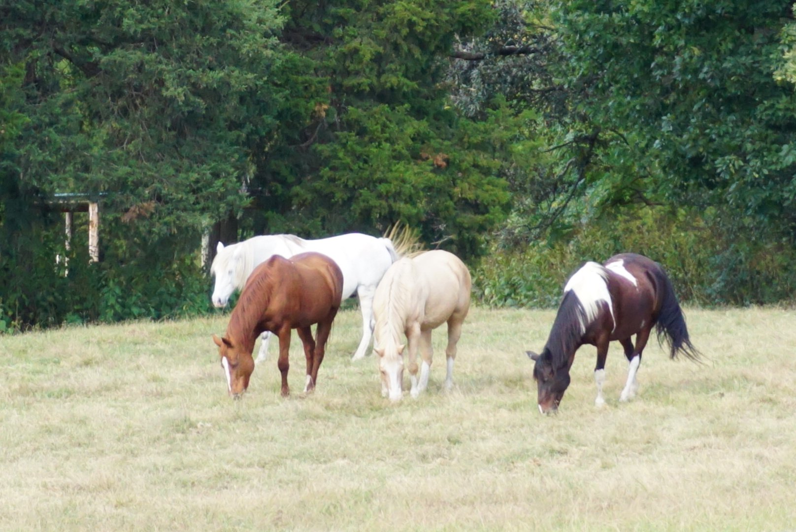Anne Close Greenway Horses