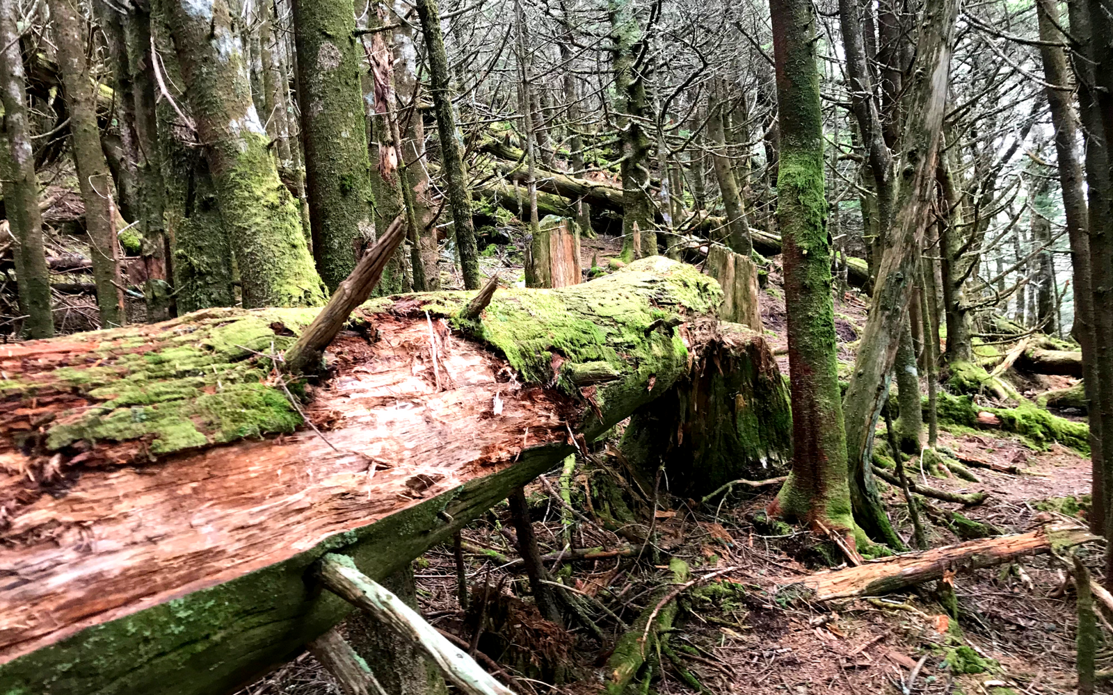 Escape the Tourist Crowds of Mount Mitchell State Park on This Fairy Tale Trail