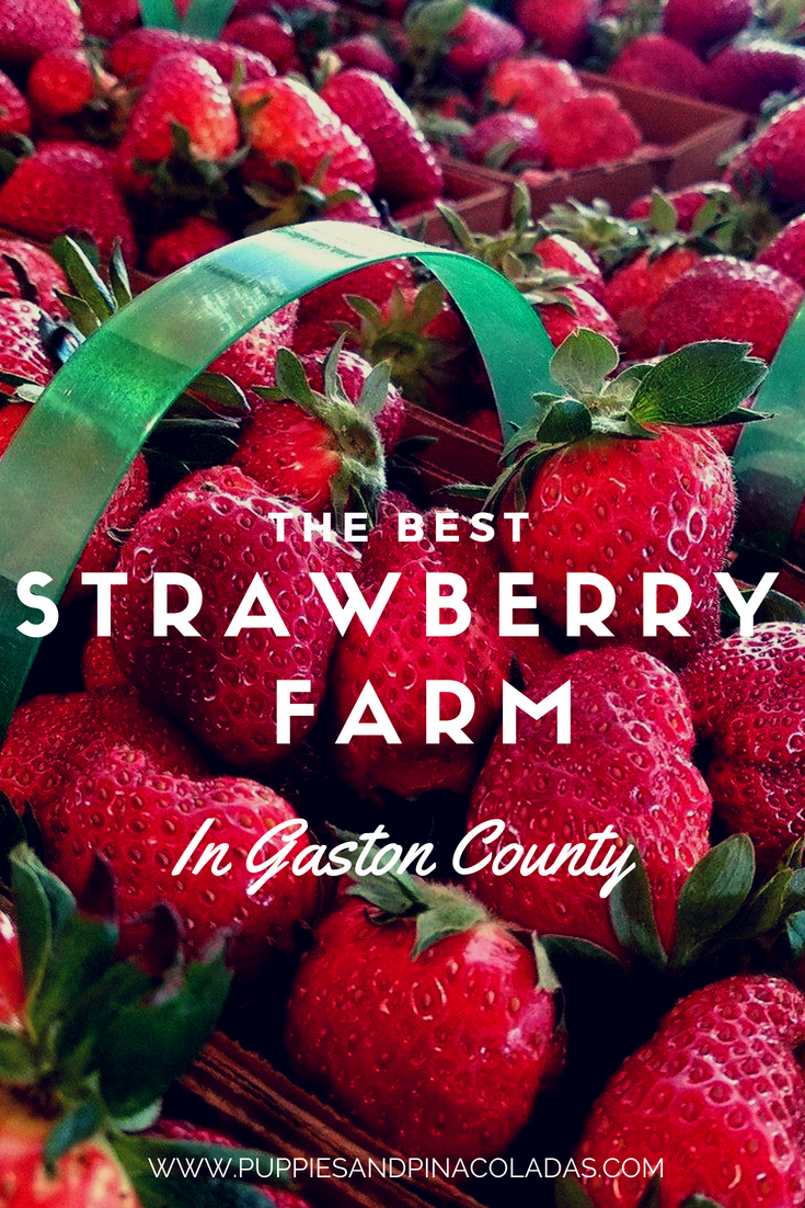 Best Strawberry Farm in Gaston County